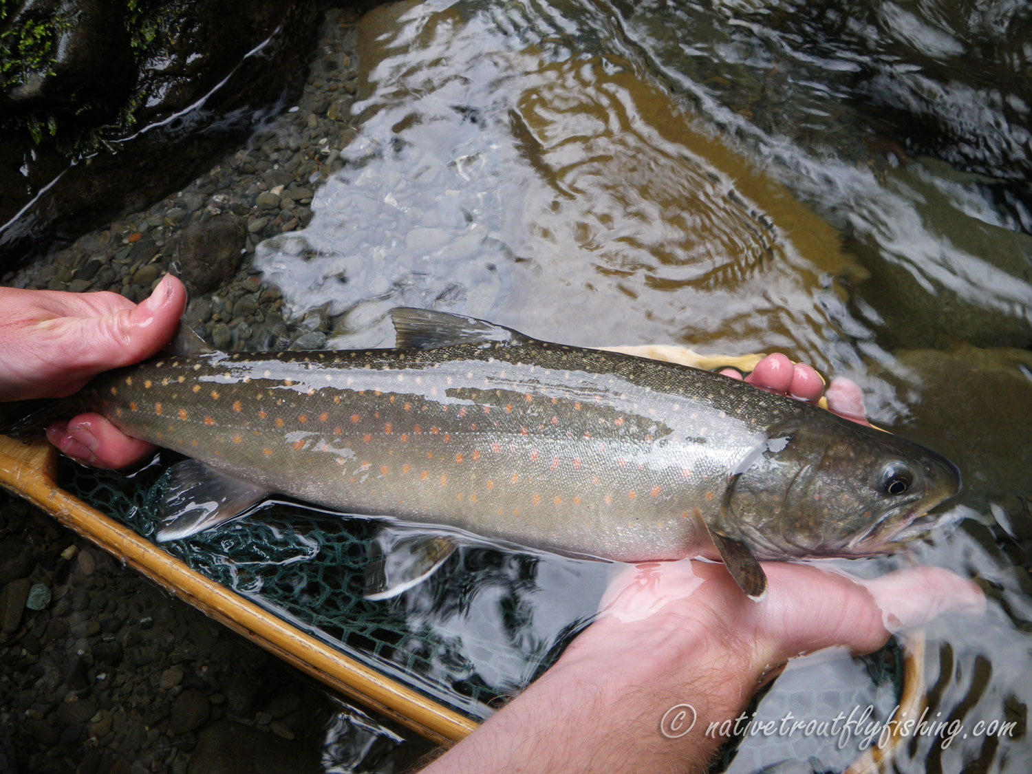 how to catch bull trout